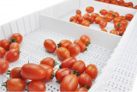 Fresh-Fruits-Being-Conveyed-On-a-Customized-Modular-Conveyor-belt-l.jpg